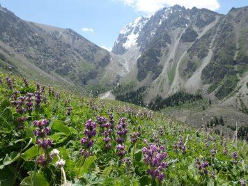 Fluss Gebirge Nationalpark unberührte Natur