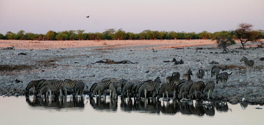 Namibia Rotel Tours Etosha Nationalpark