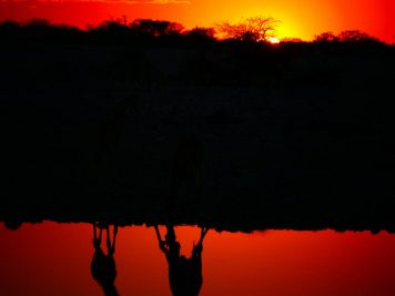 Giraffen, Namibia, Wasserloch, Sonnenuntergang, Abendrot