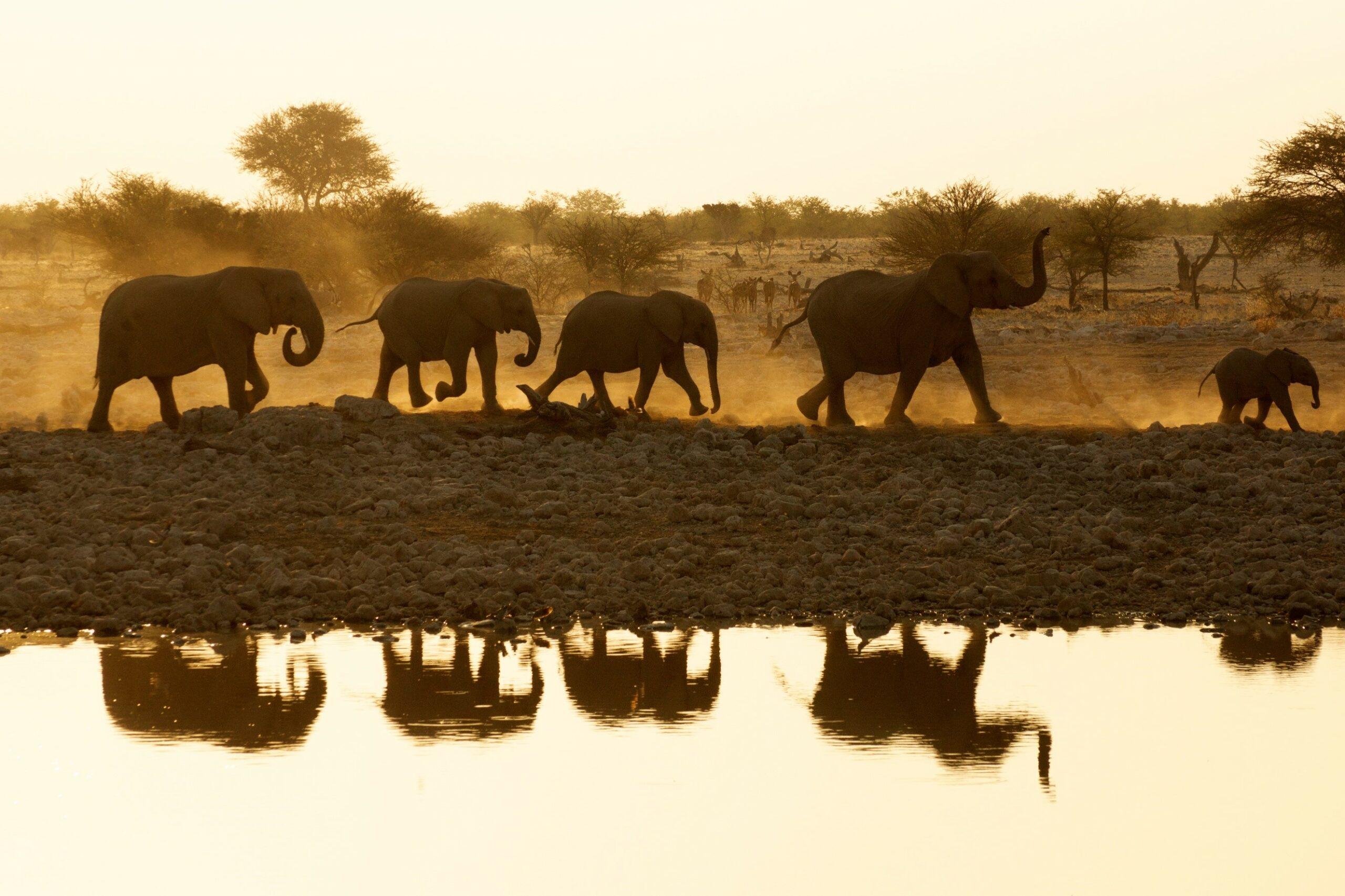 Namibia, Rundreise, Elefanten, Tierbeobachtung, Etoscha Nationalpark, Rotel Tours