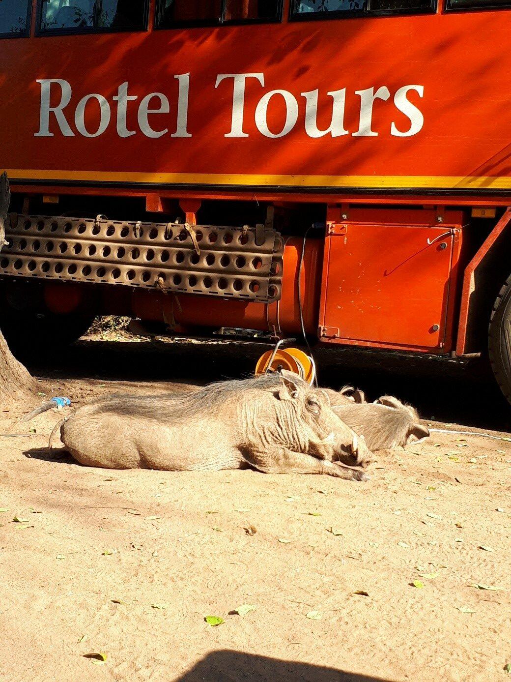 Mit Rotel Tours durch Afrika, Begegnung mit Warzenschweinen